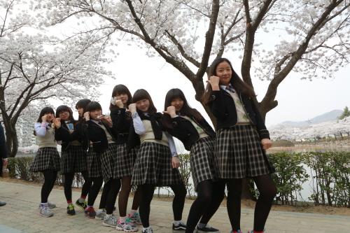 지금 김천은 벚꽃으로 물들다.